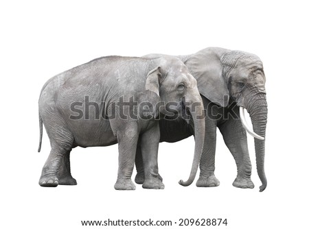 Pair of elephants isolated on white with clipping path - stock photo