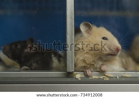 pair of hamsters, black and white hamster