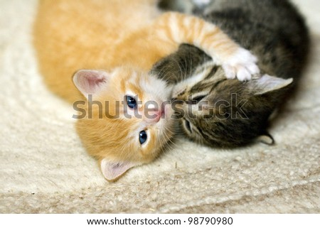 Pair of little kittens playing