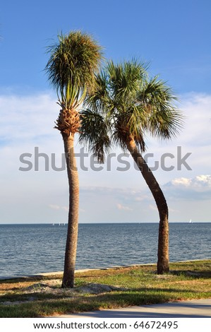 Pair of palm trees in St. Pete, Florida - stock photo