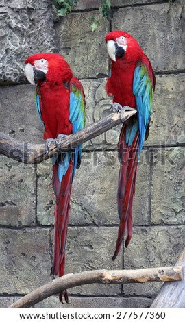 pair of parrots - stock photo