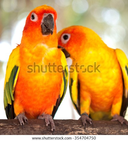 pair of parrots on a branch - stock photo