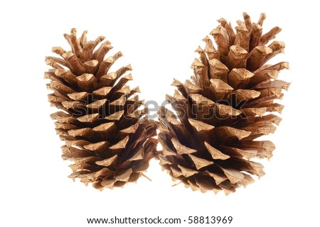 pair of pine cones isolated on a white background for use in christmas decorations - stock photo