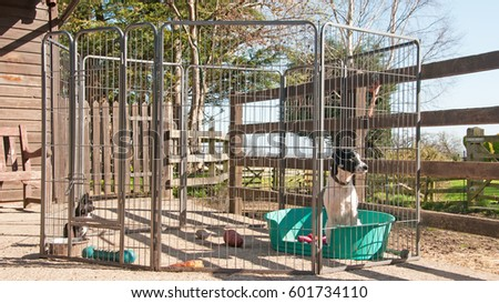 stock-photo-pair-of-puppies-in-a-dog-pen-601734110