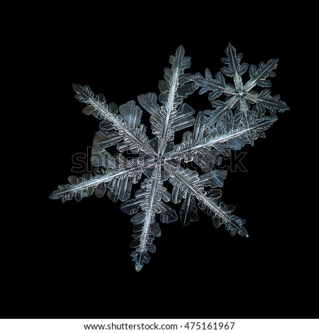 Pair of real snowflakes in flat cluster, isolated on black background. This is macro photo of two stellar dendrite snow crystals, with complex and elegant structure: large and medium size.