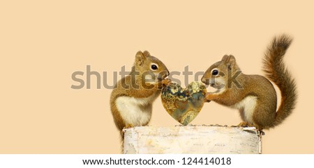 Pair of squirrels with the male giving the female a special heart shaped stone for Valentine's Day. - stock photo