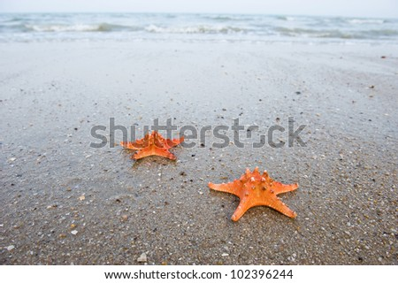 Pair of starfishes on a beach sand - stock photo