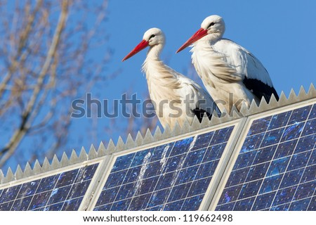 Pair of storks standing on a solar panel, winter - stock photo