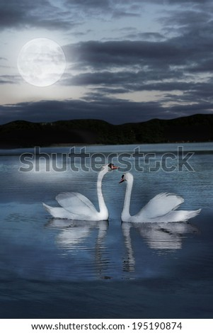 pair of swans at night during the full moonlight - stock photo