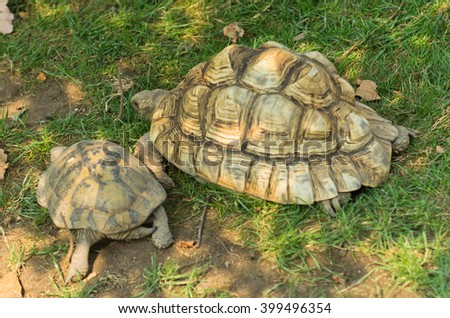 Pair of turtles in a shade at green meadow - stock photo