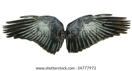 Pair of wings - stock photo