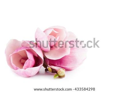 pair pink magnolia flower on white background - stock photo
