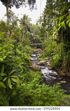 Pakerisan River. This tropical river landscape flows past the sacred temple Gunung Kawi. The Balinese - big believers in the holiness of water - believe that the river sanctifies Pura Gunung Kawi. - stock photo