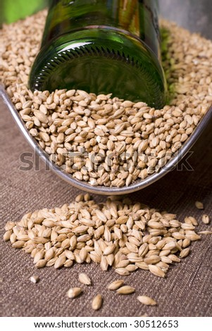 Pale malt barley, an ingredient for beer and a green beer bottle. - stock photo