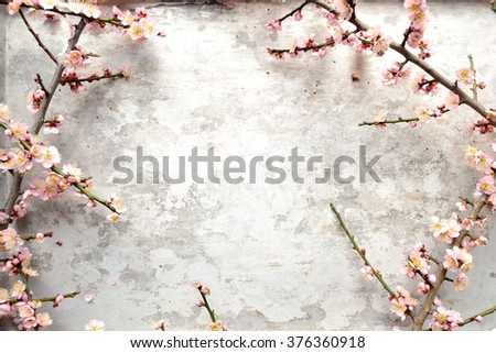 Pale ume ( Japanese apricot) blossoms on the silver background - stock photo