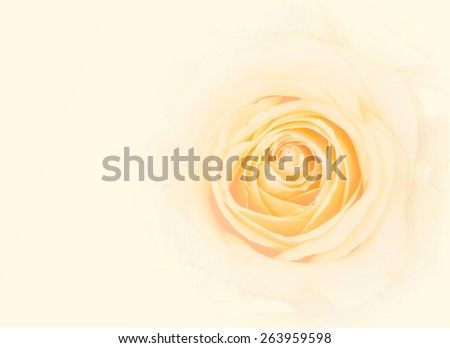 Pale white yellow rose in antique style  for background arts work (with iris blur and vignette and blank space for adding text) : Background for mothers day card : Happy mother's day  - stock photo