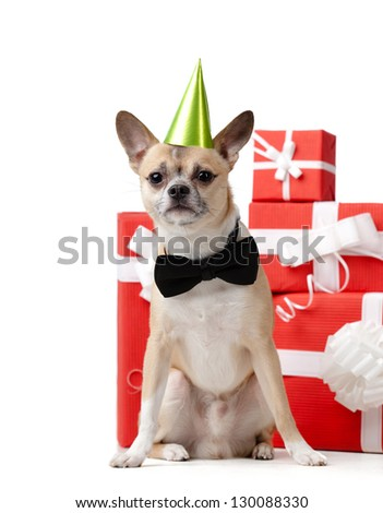Pale yellow doggy is near the presents, isolated on white - stock photo