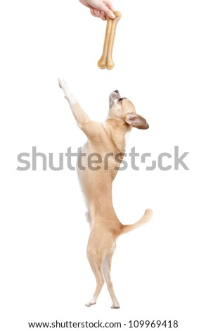 Pale yellow doggy with bone, isolated on white - stock photo