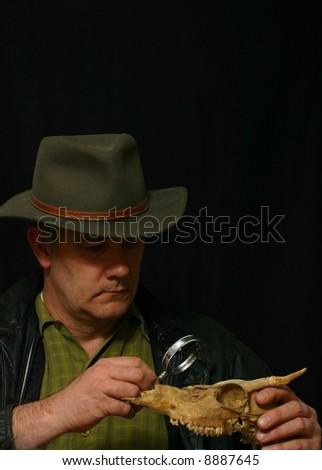 Paleontologist examining animal skull - stock photo