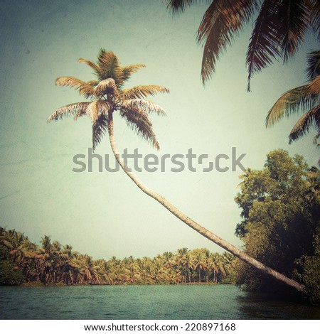 Palm above the water - stock photo
