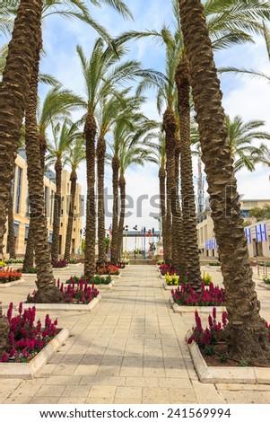 Palm alley in Jerusalem - stock photo
