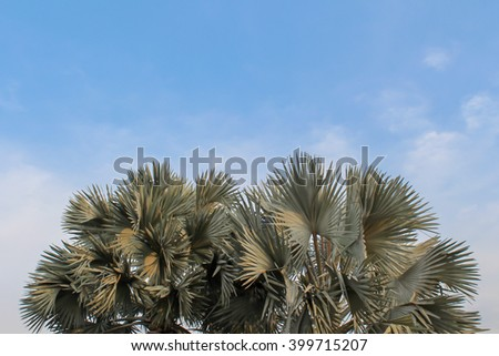 Palm and sky background.