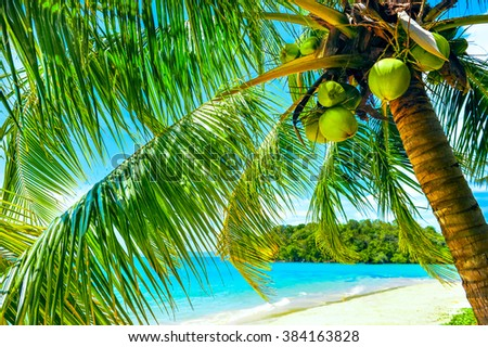 Palm and tropical beach. Vacation concept - stock photo