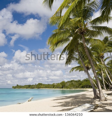 Palm and turquoise sea. White sand and warm water of tropics. Beautiful vacation spot and admiring nature.