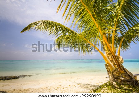 palm at a tropical beach, long strand and blue summer sky