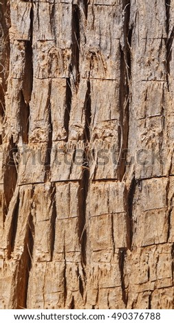Palm bark with cuts - background
