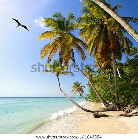 Palm beach near Pigeon Point (Tobago, West Indies) with Frigatebird - stock photo