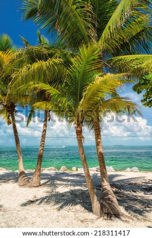 Palm beach. Palm trees on a tropical beach in Key West, Florida