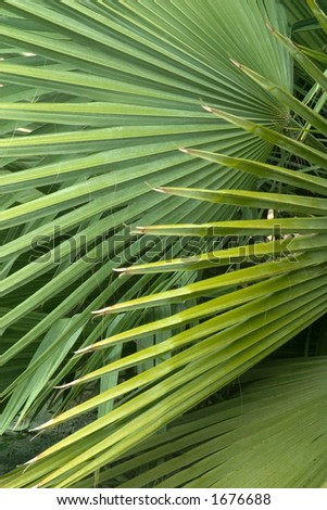 Palm Branches - stock photo
