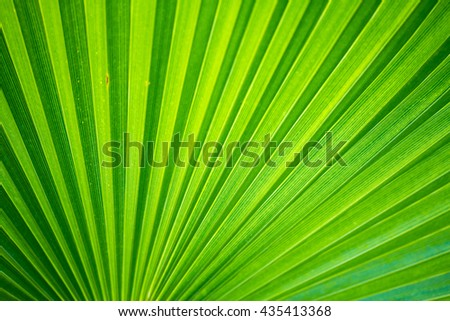 Palm bush background