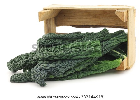 """Palm Cabbage """"Black from Tuscany"""" (Cavolo Laciniato """"Nero di Toscana"""") also known as black cabbage in a wooden crate on a white background - stock photo"""