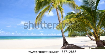 Palm couple on the beach