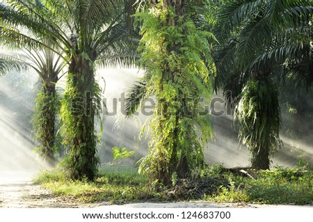 Palm Farm Day Outdoor Fog Light