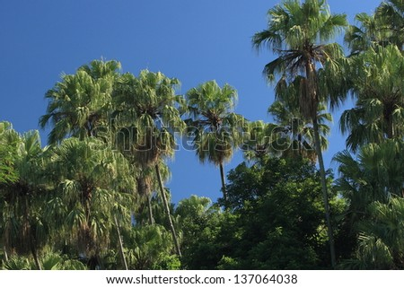 palm forest in Thailand - stock photo