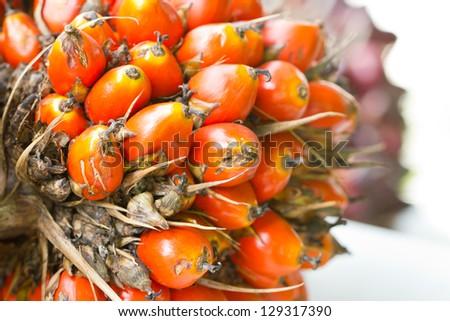Palm fruit close up. - stock photo