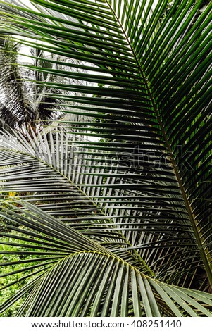 Palm green leaves - stock photo