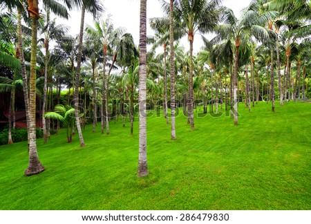 palm grove in Loro park, Tenerife, Spain - stock photo