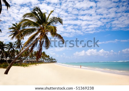 Palm hanging over tropical Caribbean beach with the coast in the background. Dominican Republic, Punta Cana. - stock photo