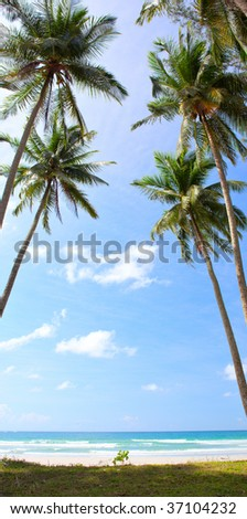 Palm in sky over water