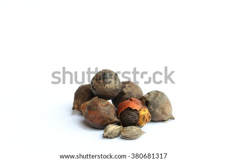 Palm kernel on a white background