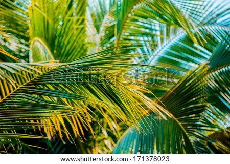 Palm leaf. Abstract backgroound