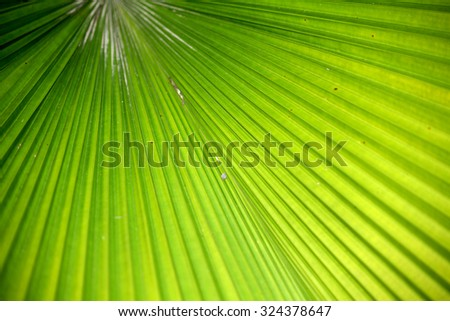 Palm leaf background & texture