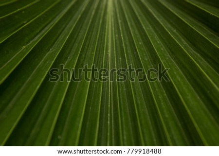 Palm Leaf Close up abstract
