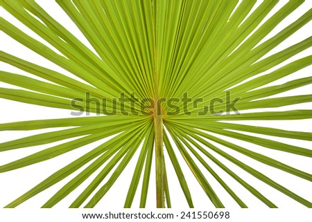 palm leaf close up surface for texture or background - stock photo