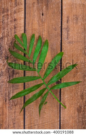palm leaf on a wooden background