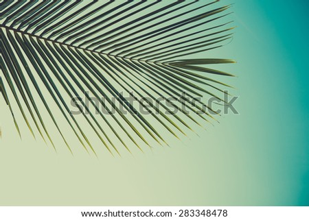 Palm leaf, retro color stylized, over sky background - stock photo